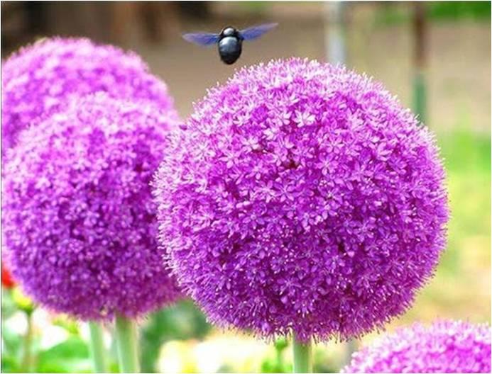 bondar_floare_violet